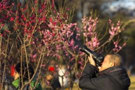 北京明城墙遗址公园看梅花