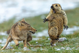 年度野生动物摄影奖得主展示了来自大自然的令人惊叹的场景