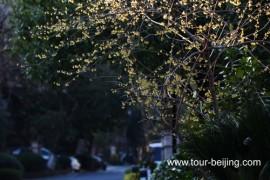 杭州早春二月:春暖花开