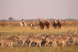 博茨瓦纳奥卡万戈三角洲旅游指南